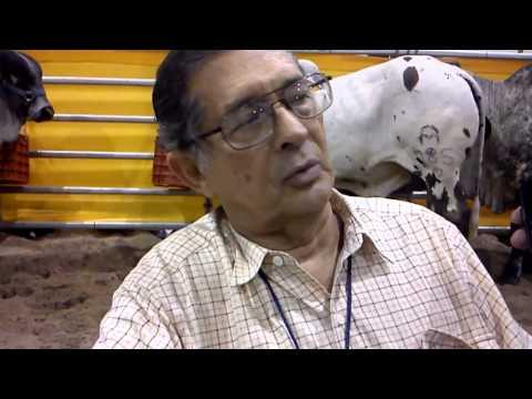 Abel Americos-Participante de la Expo Ganado Cebu 2013-Falta de venta de ganado