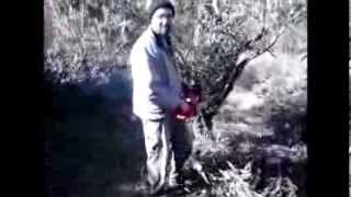 getlinkyoutube.com-Kλάδεμα ελιών με αλυσοπρίονο Craftop 45cc Pruning olive chainsaw Craftop 45cc