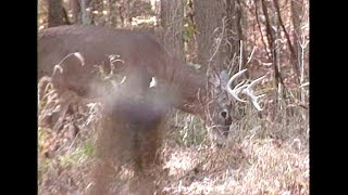 getlinkyoutube.com-Dan Fitzgerald Knock Down Shoulder Shot Buck
