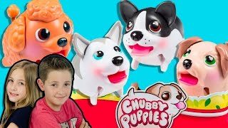 getlinkyoutube.com-4 CHUBBY PUPPIES *NEW* CUTE PETS TOYS Puppy Dogs Husky Terrier Spaniel Unboxing Review Обзор PLP TV