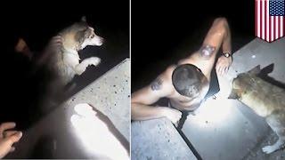 getlinkyoutube.com-Policjant bohater ratuje psa, który wpadł do morza w zatoce.