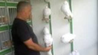 getlinkyoutube.com-buchon gaditano blancos 3