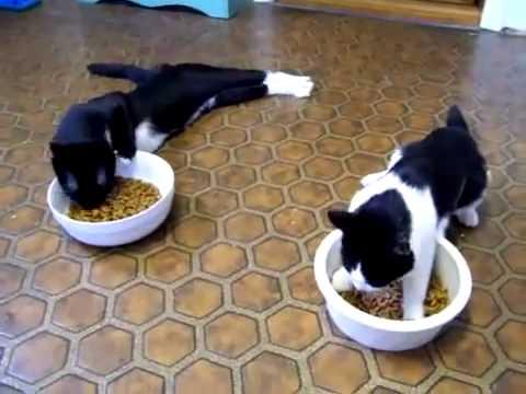 Mačke posle anestezije