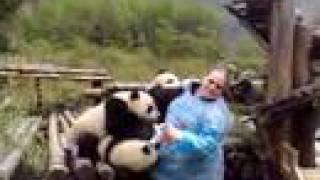 getlinkyoutube.com-Charlee gets mauled by baby pandas