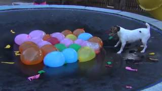 getlinkyoutube.com-Spaz Attacks Water Balloons--Full Version