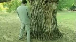 Borat paying respect to the oldest tree in USA