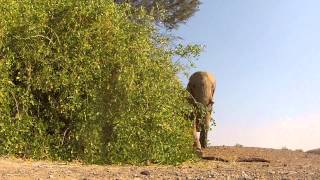 [Elephant VS GoPro] Video