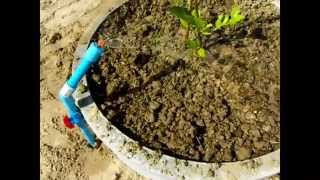 getlinkyoutube.com-การปลูกมะนาวในวงบ่อซีเมนต์แบบรองฝาและลงดิน ตอน3/3