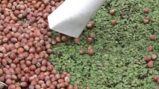 Nut Harvester.mov