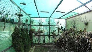 getlinkyoutube.com-Silvestrismo.Visitando un Magnifico Aviario(HD)