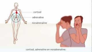Burn-out - Symptomen en behandeling