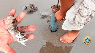 getlinkyoutube.com-Cómo Sacar Napes o Maruchas【Ghost Shrimp】#Cebodepesca