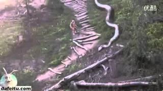 getlinkyoutube.com-Una de las serpientes más grandes del mundo, la altura visual de más de cincuenta metros