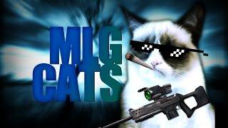 getlinkyoutube.com-MLG CATS