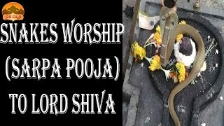 getlinkyoutube.com-DAIVA SANNIDHI-SNAKES WORSHIP (SARPA POOJA OR PUJA) TO LORD SHIVA AT VARIOUS SHIVA TEMPLES IN INDIA