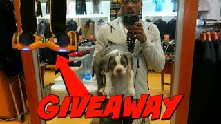 Took My Puppy To The Mall (Surprise Giveaway For My Subs)