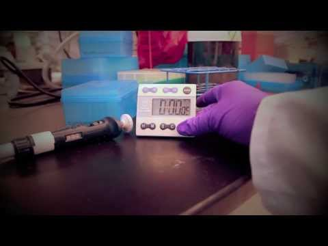 Massague Lab - Don't Stop Pipetting (Don't Stop Believing Parody)