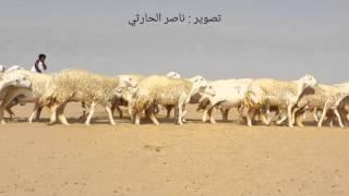 getlinkyoutube.com-مونتاج كليب لعرض من مراح الطوافح للمالك المربي المبدع ابو زياد المحمادي