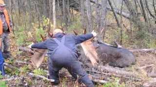 getlinkyoutube.com-2013 Maine Moose Hunt Northern Maine Allagash