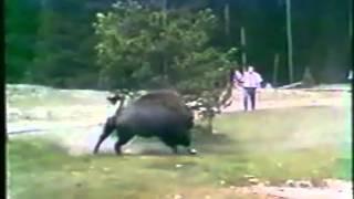 getlinkyoutube.com-Нападение животных на людей