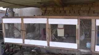 getlinkyoutube.com-Разведение кроликов: как сделать клетки для кроликов своими руками?