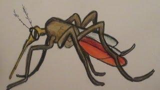 getlinkyoutube.com-كيف تقضي على البعوض ?