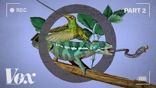 How wildlife films warp time