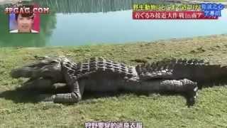 getlinkyoutube.com-VIDEO lucu nyamar jadi buaya  Jepang jahil [ asli ngakak]