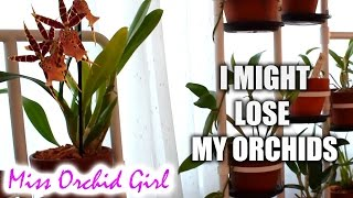 getlinkyoutube.com-I might lose my Orchid collection