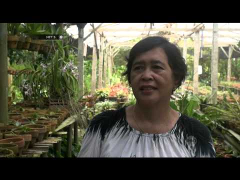 Mengunjungi Kebun Anggrek Upaya Edukasi Anak Cintai Lingkungan -NET5