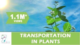 getlinkyoutube.com-Transportation in Plants