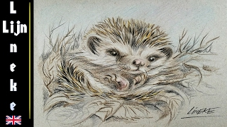 getlinkyoutube.com-How to draw a Hedgehog in color pencils / animal drawings #62
