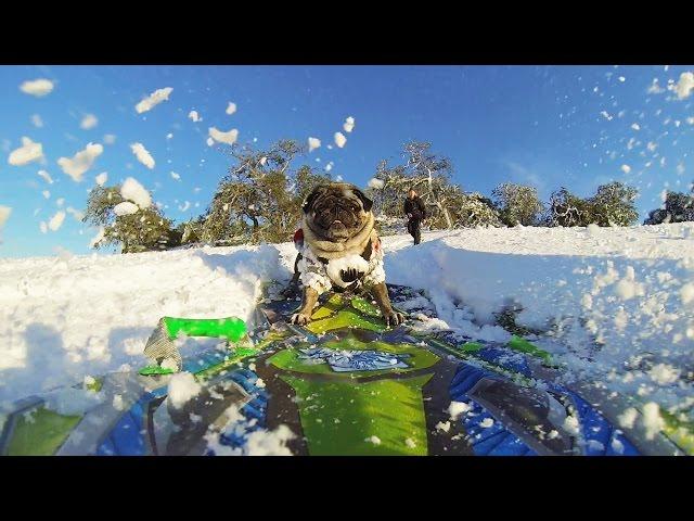 GoPro: Pug Life