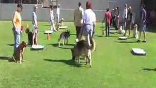 getlinkyoutube.com-Group Dog Training classes begin