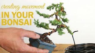 How to Create a Bonsai with Movement : Wiring a bonsai tree trunk