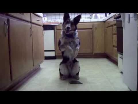 Το πιο έξυπνο σκυλί στον κόσμο