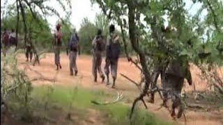 OBN Afaan Oromoo : Lammaan Lammiif-OBN 25 07 2010 . Dhaamsa Lammaan Lammii width=