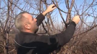 getlinkyoutube.com-Rezidba trešnje - Grocka