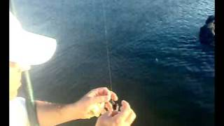 getlinkyoutube.com-صيد البوري