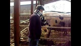 getlinkyoutube.com-Uzbek fermer Koreada.AVI