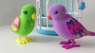 getlinkyoutube.com-Little Live Pets Bird Cage - Beauty Bella & Silly Billie Talking Birds Review