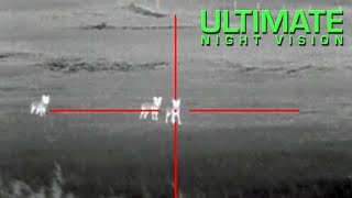 getlinkyoutube.com-Thermal Coyote Hunting with the ATN ThOR - 13 Coyotes Down