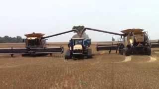 getlinkyoutube.com-Big CLAAS Lexion Combines Harvesting Wheat