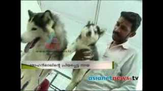 Mohanlal imported Storm, a Siberian Husky show