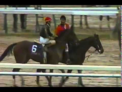 Personal Ensign   1988 Breeders Cup Distaff plus Post Race and Interviews   YouTube