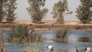 getlinkyoutube.com-Minnesota Public Land Duck Hunting with Fowled Reality