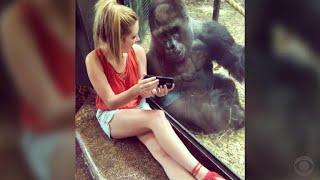 Internet falls in loves with smartphone-loving gorilla