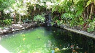 getlinkyoutube.com-Natural looking koi pond