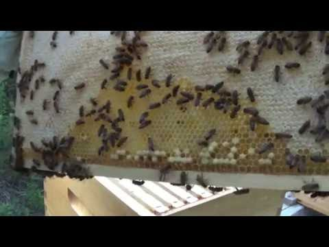 Beginner Bee Keeping One Hive Struggling Badly