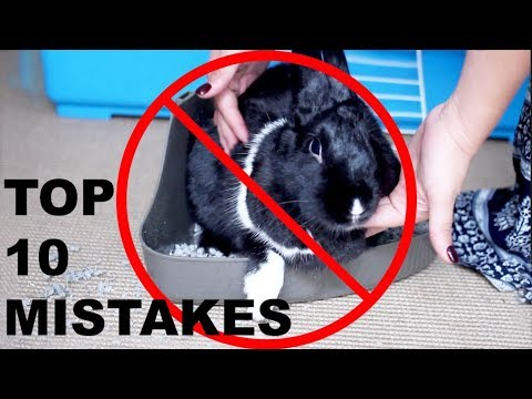 Top 10 Mistakes with Rabbits Video